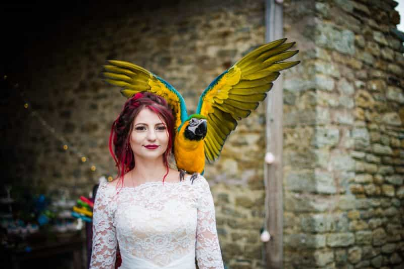 avoid the unexpected - animals at weddings